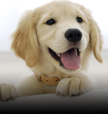 Project Image for Happy Dog | PPC Case Study | Infinity Nation