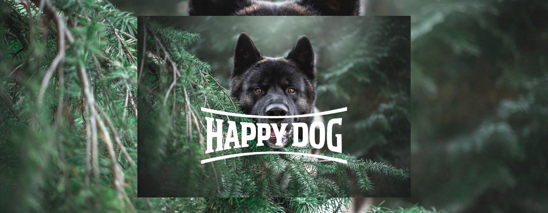 Happy Dog SEO