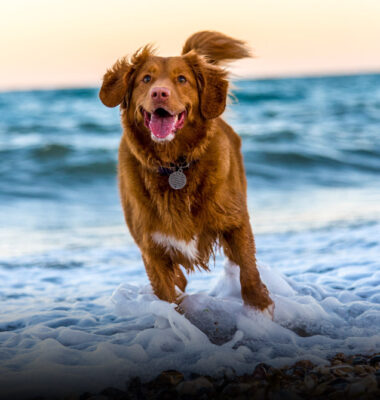 Project Image for Happy Dog | SEO Case Study | Infinity Nation